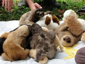 Sloth Cuddle Puddle!