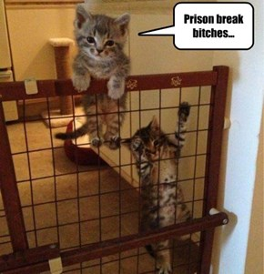 Prison break bitches...