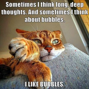 My Cat Is A Real Bubble Brain.
