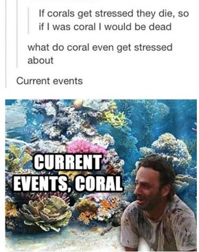 Current Events, Coral