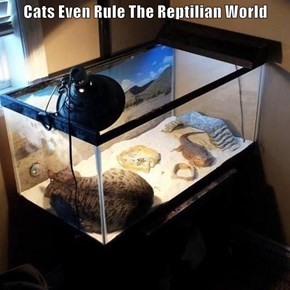 Cats Even Rule The Reptilian World