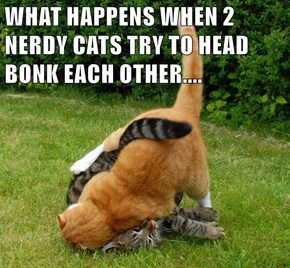 WHAT HAPPENS WHEN 2 NERDY CATS TRY TO HEAD BONK EACH OTHER....
