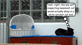 Yeah, right, like any self respecting basement cat would actually sleep in a white whicker cat bed