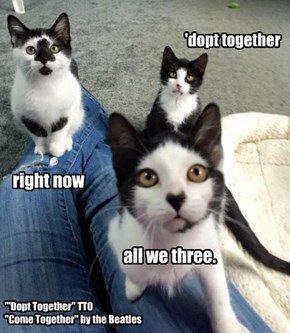 """""""'Dopt Together"""" TTO """"Come Together"""" by the Beatles"""