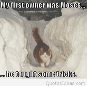 Where was this cat when I was shoveling my driveway?