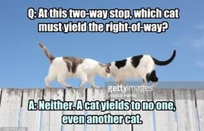 From the DMF (Dept. of Motorvating Felines) Handbook.