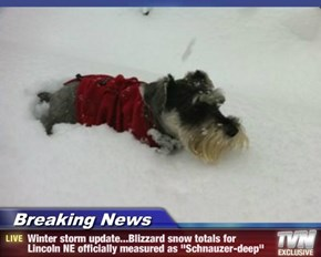 "Breaking News - Winter storm update...Blizzard snow totals for Lincoln NE officially measured as ""Schnauzer-deep"""