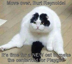 Move over, Burt Reynolds!  It's time for a NEW cat to make the centerfold for Playgirl!
