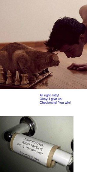 Checkmate! Cat wins again