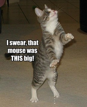 Cats Are BIG At Exaggeration.