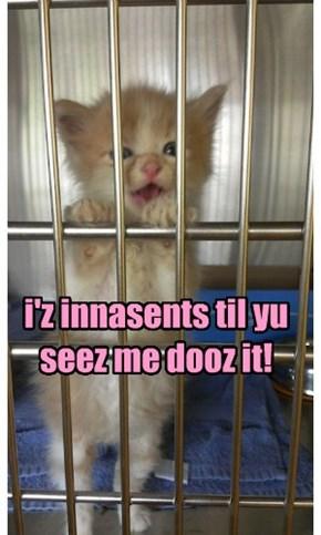 I iz innasent kittie!