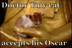 Doctor Tiny cat  accepts his Oscar