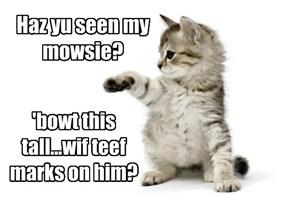 Haz yu seen my mowsie?