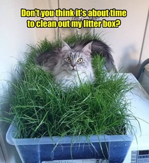 Don't you think it's about time to clean out my litter box?