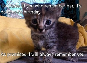 She loved little gray, striped kittens more than anything