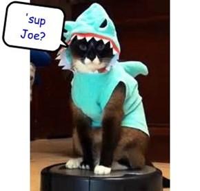 'sup Joe?