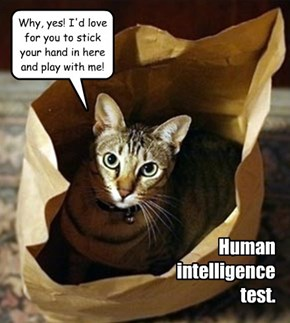 Human intelligence test.