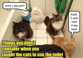 LItter vs Toilet training
