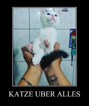 KATZE UBER ALLES
