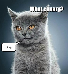 What canary?
