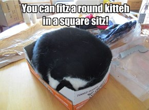 You can fitz a round kitteh  in a square sitz!
