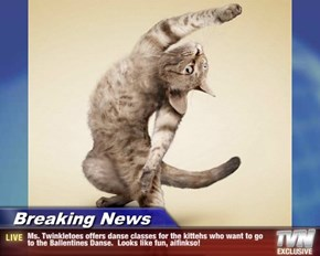 Breaking News - Ms. Twinkletoes offers danse classes for the kittehs who want to go to the Ballentines Danse.  Looks like fun, aifinkso!