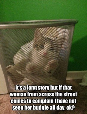 It's a long story but if that woman from across the street comes to complain I have not seen her budgie all day, ok?