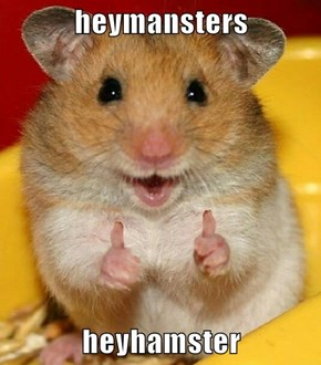 heymansters  heyhamster