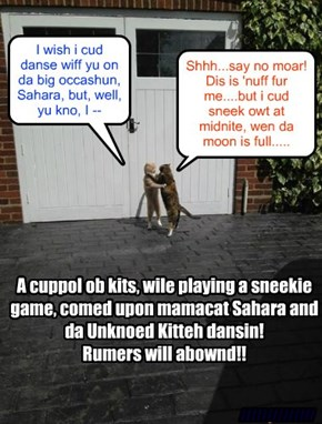 Mamacat Sahara and da Unknoed Kitteh git romantik finks ob da Balentine Danse at KKPS.