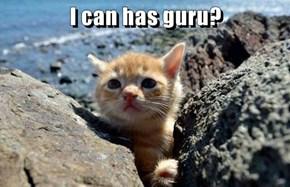 I can has guru?