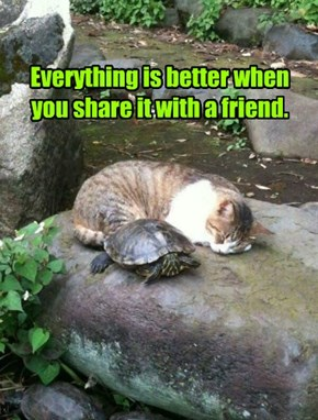 Everything is better when you share it with a friend.