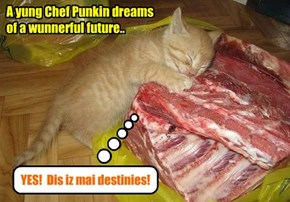 Even as a bery yung kitten, Punkin knew dat he wanted to be a Chef!