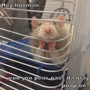 Hey hooman..  wud yoo peas pass da gray poop on?