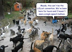 Look Above Your Head, Harold. NOW It's A LOLcat Convention.