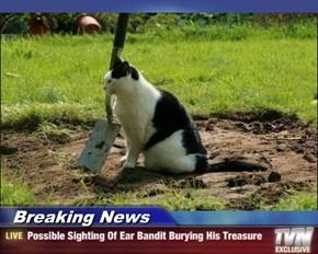 Breaking News - Possible Sighting Of Ear Bandit Burying His Treasure