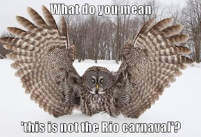 What do you mean  'this is not the Rio carnaval'?
