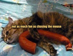 not as much fun as chasing the mouse