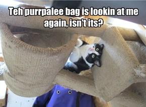 Teh purrpalee bag is lookin at me again, isn't its?