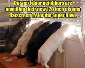 TV Envy
