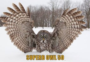 SUPERB OWL 50