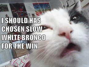 I SHOULD HAS                           CHOSEN SLOW                               WHITE BRONCO                                      FOR THE WIN