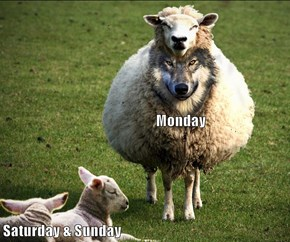 Monday Saturday & Sunday