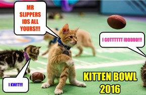 KITTEN BOWL 2016