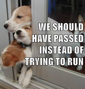 WE SHOULD                                   HAVE PASSED INSTEAD OF                                         TRYING TO RUN