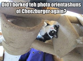Did I borked teh photo orientashuns of Cheezburger again?