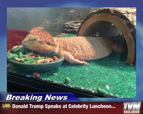 Breaking News - Donald Trump Speaks at Celebrity Luncheon...