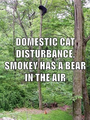 DOMESTIC CAT DISTURBANCE, SMOKEY HAS A BEAR IN THE AIR