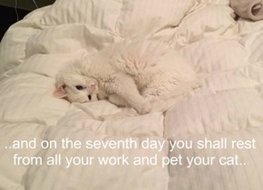 ..and on the seventh day you shall rest from all your work and pet your cat..