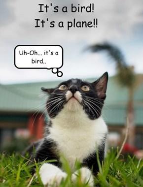 It's a bird! It's a plane!!