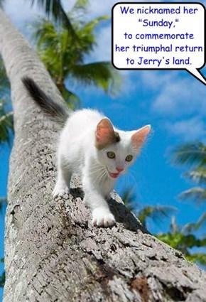 Jerry's cat